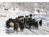 Artvin'de besicilerin zorlu kış şartlarıyla mücadelesi