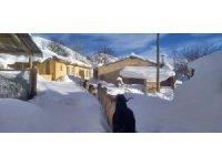 Keçilerin zorlu kış şartlarında karın doyurma mücadelesi