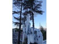 Kahramanmaraş'ta soğuktan ağaç buz tuttu