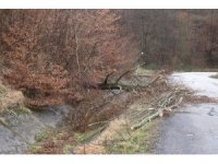 Şiddetli fırtına çatıları uçurdu, ağaçlar devrildi