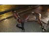Aniden yola fırlayan başıboş at kazaya yol açtı