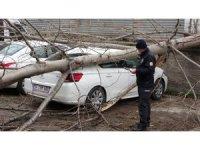 Samsun'da şiddetli rüzgarda kırılan ağaç otomobilin üzerine düştü