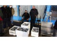 Balıkçılar gelecek yıl Karadeniz'de hamsi bolluğu bekliyor