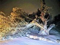 500 yıllık tarihi ardıç fırtınaya yenik düştü
