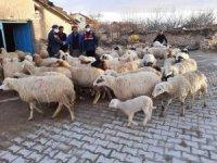 Konya'da jandarma çalınan 99 küçükbaş hayvanı bularak sahibine teslim etti
