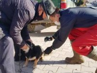 Hisarcık'ta sahipli kedi ve köpeklere kuduz aşısı yapılıyor