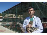 Hayvanlarda kısırlaştırmanın önemi masaya yatırıldı