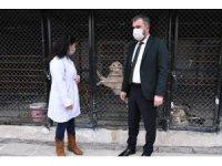 Pursaklar Belediyesi sokak hayvanlarını sahiplendiriyor