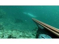 Çanakkale Boğazı'nda ters yüzen yunus balığı sualtı kamerasıyla görüntülendi
