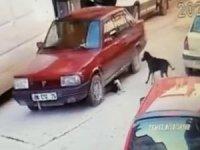 Yavru köpeği ezme anı kamerada