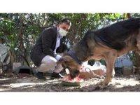 Cezaevinden gelen dilekçe hayvanları ölümden kurtardı
