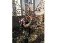 Ağaç dallarına meyve astılar