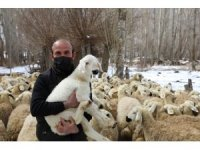 Bu projeyle çiftçiler 22 bin hayvana kavuştu