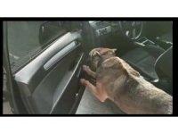 Arabanın ön kapısına zulalanan uyuşturucu maddesi  Chako'ya yakalandı