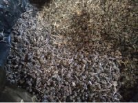 Batman'da binlerce arı telef oldu