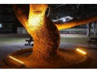 Kocasinan'ın tarihine ışık tutan çınar ağaçlarıyla görsel zenginlik