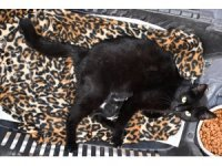 Ayağı kırılan gebe kedi hayata döndürüldü