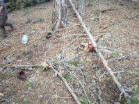 Kestiği ağaç üzerine devrilen adam öldü