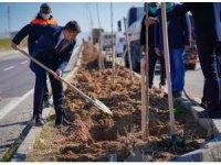 Silvan'da refüj yeşillendirme çalışmaları