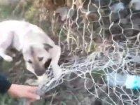 Bahçe tellerine takılan köpek kurtarıldı