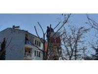 Osmancık'ta belediye ekipleri ağaçları buduyor
