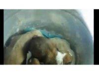 Beykoz'da yeraltı çöp konteynerine atılan 7 yavru köpek, itfaiye tarafından kurtarıldı