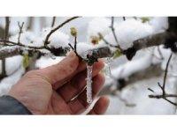 Meteoroloji'den Aydın'a 'zirai don' uyarısı