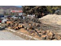 Belediye GES için yaşları 10-50 arasında değişen 100'e yakın çam ağacını kesti
