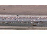 Düden Gölü'ndeki flamingo sayısı düştü