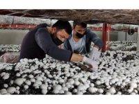 Üniversiteyi bitirip köyüne döndü: Ürettiği mantarlar kapış kapış satılıyor