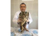 İyileştirilen puhu baykuşu doğaya bırakıldı