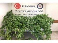 Sultanbeyli'de uyuşturucu tacirlerine ve suçlulara göz açtırılmıyor
