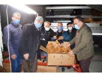 Bafra'da tütün alımları başladı