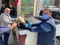 Av köpeklerine kuduz aşısı yapıldı