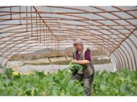 Beykoz'da  Adil Sözleşmeli Tarım Projesiyle üretilen ürünler ihtiyaç sahipleriyle buluşturulacak