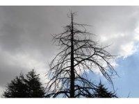 Kuzey Amerika kökenli istilacı böcek, Doğa Anadolu'ya giriş yaptı
