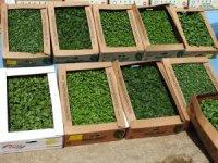Şahinbey'de çiftçilere fide desteği sürüyor
