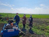 Kırklareli'nde kestane balkabağı demonstrasyonları kuruluyor
