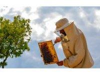 Bayburt'ta çiçeklerin açmasıyla arıcıların zorlu mesaisi başladı