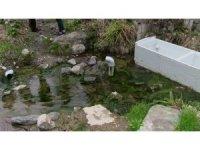 Artvin'de kaderine terk edilmiş tarihi kaplıca ilgi bekliyor