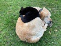 Kedi ile köpeğin samimi dostluğu