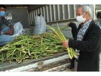 Lösemi hastalarının umudu olan bitki tezgahlarda yerini aldı