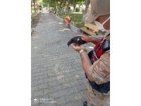 Kedinin saldırısına uğrayan güvercini jandarma kurtardı
