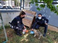 Polis memurları devriye sırasında buldukları yavru köpeği sahiplendi