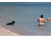 Dünyaca ünlü sahilde sokak köpeğinden turistleri şaşırtan davranış