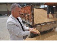 Kuraklık kendini iyiden iyiye göstermeye başladı: Geçen sene 12 ton ürün alınan araziden bu sene 2 ton mahsul alındı