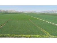 "DSİ: ""Diyarbakır'da 577 bin 670 dekar arazi sulanacak"""
