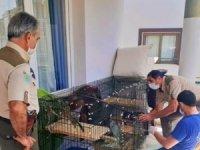 Bakımı yapılan yavru sincaplar doğaya salındı