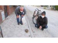 Burhaniye'de kirpiler sokaklara çıktı