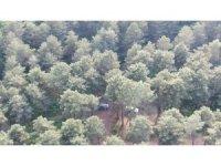 Tam kapanmada Aydos Ormanı'ndaki mangal eğlencesi havadan görüntülendi